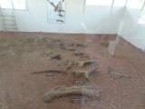 2) Dinousauris botten