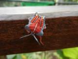 16) Bijzondere insect