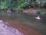 57) Er zit niet veel vis meer in de rivier