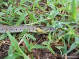 22) We zien veel slangen in Thailand
