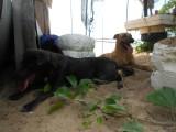 15) Fang en Fluffy houden ons gezelschap