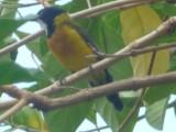 45) Sun bird