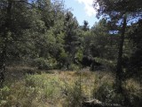 Tussen de bomen