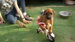10) leren fietsen