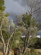 16) Pauls snoeiwerk brengt de bomen weer tot leven