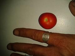 14a) de tomaten zijn klein maar fijn