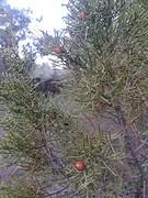 21) Een van onze kerstbomen...