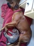 2) Vechten asls kat en hond krijgt een andere betekenis...