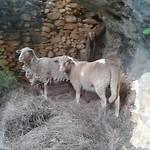 6) Momo en Mopti