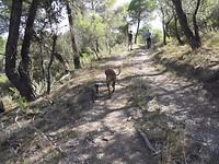 29) Aan de wandel met hond en kat