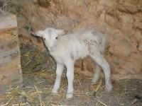 10) Masai groeit hard