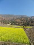 2) Mooie korenbloem velden