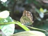 2) Mooie vlinders
