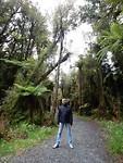 Regenwoudpad op weg naar het dorp