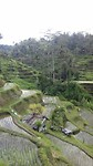 Wandeling Tegalalang rijstvelden