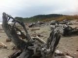 Wrakhout op het strand