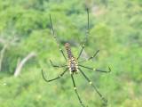 En nog een spiderrrrrr!