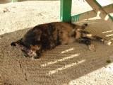 'Zandkat' komt onder Chiel's bedje slapen