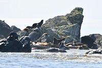 Zeeleeuwen 2