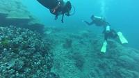 Duiken bij de Great Barrier Reef