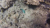Great Barrier Reef (een indruk van de wereld onder water)