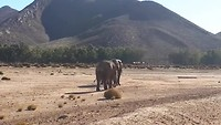 Safari olifant 2