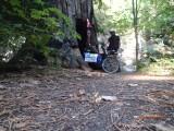 Doorway in Redwood tree