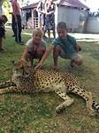 cheetahs aaien 😊