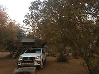 Van deze bomen at Bertus 's nachts......😳🙈