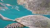 Turtle swim @ Gili air