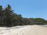 the beach met cocosnotenbomen en mangobomen