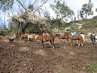 Puur toeval: paardrijden!