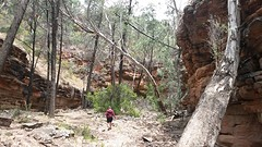 another view @ Alligator gorge, mt remarkable