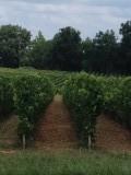 Bordeaux streek