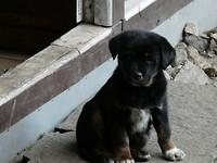 164-Pup