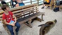 Lijken net huisdieren de zeehonden