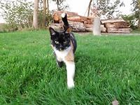 Kat in gras