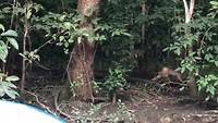 Gave video van troep Makak die passeren