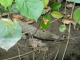 En we zagen er dus twee, weliswaar kleintjes maar toch gaaf om ze te hebben gezien in het wild