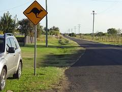 Opgelet: Overstekende Kangaroos
