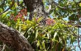 Hier groeien de orchideen gewoon in de boom.