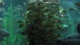 Visjes voeren