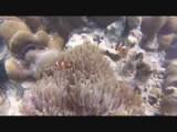 Snorkeling with Nemo