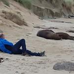 Lig je op het strand tr zonnen met zeeleeuwen