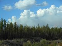 De vele dennenbomen rondom Jan Lake