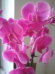 Orchidee als pleister op de wond