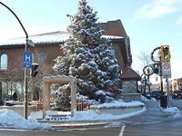 Kerstboom Dundas