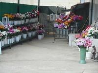 Net zoals de bloemen voor op het graf