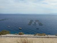 Onderweg langs de kust veel viskwekerijen