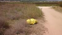 Hier 4 zakken met afval verzameld